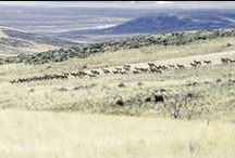 Wild Nevada / Just a few of my Nevada Wildlife photographs. / by Kristy Crabtree