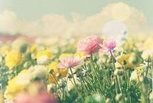 ♥ Bloemen en planten ♥