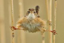 Birds / by Renee Wiley