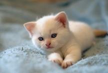 So cute / Trop mignon