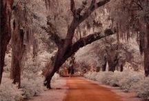 Places I'd Like to Go / by Stephanie Carlson