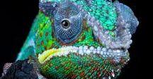 Mother Nature | Fauna