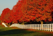 Fall, my favorite time of year / by pam baker- bairnsfather