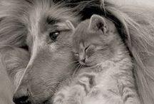 Precious animal moments / by Lindsey Samardzija
