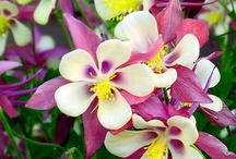 Colorful Flowers / by Sandee Carranza