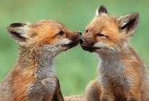 foxy <3 / by Sarah G.