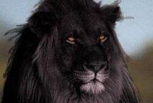 *Love the Wild / Sweet, furry, fun, pure wild animal love