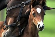*Love the Noble Horse / In honor of that most graceful and elegant of creatures--the horse
