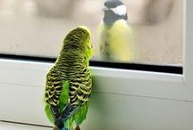 feathered friends / Quaker Parrots and other winged beauties