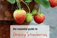 DIY ~ Garden: Berries / Tips for growing all kinds of berries