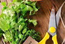 DIY ~ Garden: Herbs / Tips for growing herbs