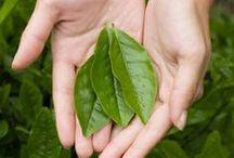 DIY ~ Garden: Tea Herbs / Herbs to grow for making your own tea
