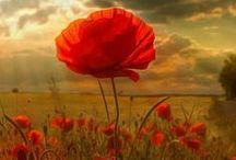 & POPPIES! / On aime le thé, les coquelicots et tout ce qui va avec =)  We love tea, poppies and all that goes with it =)