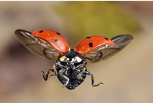 Ladybug Fly Away Home! / Everything Ladybug !