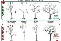 Fruit Trees / Care and keeping of my dwarf fruit trees.