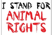 Animal Liberation /   / by Ayla Shoulders