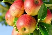 Recipes:  Apple