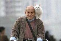 mans&cats