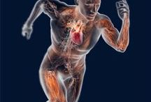 Curiosidades Da Anatomia