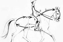 Horse Training & Tips