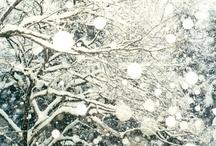 Winter Wonderland / by Amy Curtis