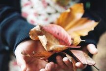 falling for fall / by luxury and opulence