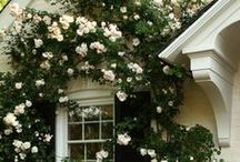 gardens and flowers / by Deirdre Allen
