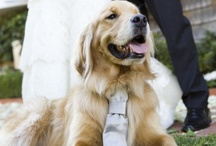 ~Puppy Love~ / Wedding Dogs + Bridal Buddies / by Hustle Your Bustle