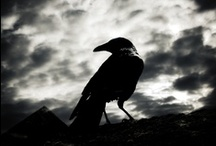 that.is.so.raven.crow.&.poe. / My absolute favorite author is Edgar Alan Poe!  I love anything to do with Ravens & Crows!