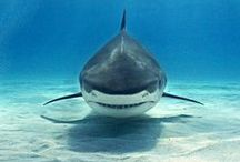 jaws. / my favorite animal....love & respect