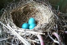 nests.