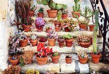 garden.stuff. / Garden Plants, Flowers, Gardens & Things that Make Your Garden Grow!! / by ~~ Cathleen ~~