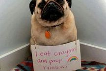 Dog (& Cat) Shaming / by 😷Dr. Sue Molloy🐾