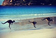 aussie love / by Travelocity Travel