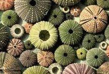 Seashells / #Seashells #coquillage #coquillages