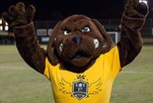 Our Mascot / Chesapeake Bay Retrievers
