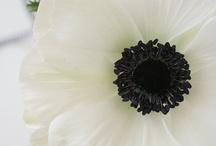 The Beauty of Anemone / by Weddingish