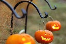 Fall  / by Sophia Spaghetti