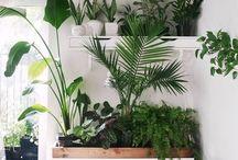 URBAN JUNGLE / Green, Plants, Bloemen, Flowers, vintage pottery.