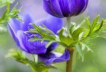 Beautiful Flower Images / by Weddingish