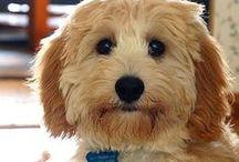 P6: Beautiful Dogs / by Rachel Patten