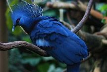 Birds: Exotic-ness / Brilliant colors, unusual shaped bills and exotic locals / by Rachel Patten