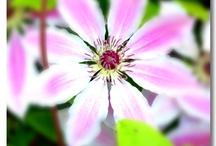 My Blog Photo's