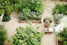 garden ideas / by Carole Maynard
