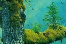 Arbres / Trees / by Albert Solé