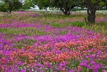 Beautiful Fields and Meadows / Nothing more beautiful Than God's Creation ! ♥ Welcome to my boards. . I only ask that you Please do not power pin your way through boards. Enjoy and be inspired Thank you so much for following  / by Susan Edghill