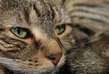 Cats / dog lovers should discover cats too.