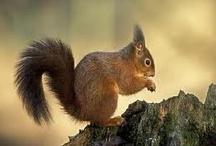 Esquirols / Squirrels