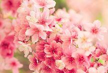 Floral / by Nicola Rooney