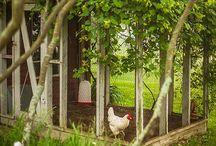 farm and garden ☀